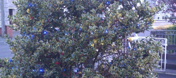 This is the Holly Tree lit up with the 400 blue bulbs - not a clear pic as it was at 3pm